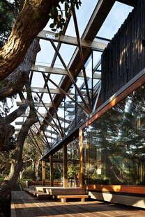 Herbst Architects sotto gli alberi di Pohutukawa in Nuova Zelanda