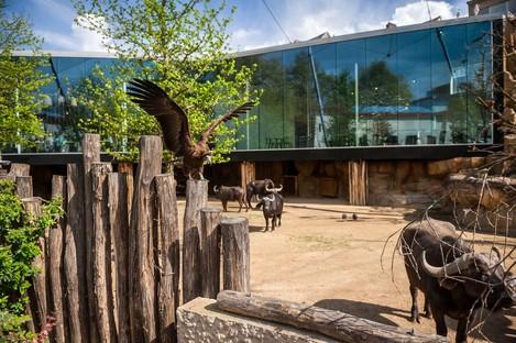 Studio Farris Architects Nuovi spazi per lo zoo di Anversa