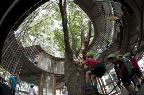 Tezuka Architects - Anneau autour de l'arbre. © Katsuhisa Kida/FOTOTECA