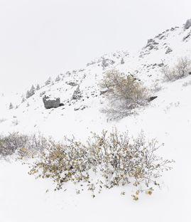 Antoine o un'esperienza nelle Alpi di Bureau A