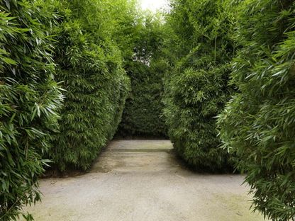 Il labirinto più grande del mondo