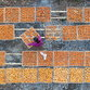 Fotografia aerea, raccolta di cachi in Cina