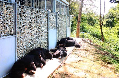 Atelier COLE e il santuario degli orsi in Vietnam