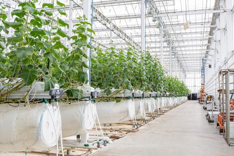 Lufa Farms, produrre frutta e verdura a km0 a Montreal