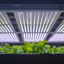 Verdure a km0 a Copenhagen con una Vertical Farm