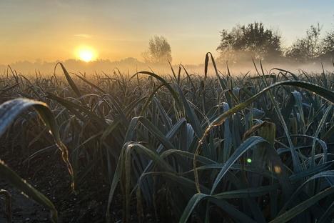 GROW di Daan Roosegaarde, la bellezza dell'agricoltura