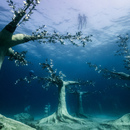 Apertura del Museum of Underwater Sculpture Ayia Napa (MUSAN) a Cipro