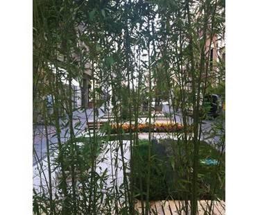 Il verde in città: Orto urbano temporaneo a Bari
