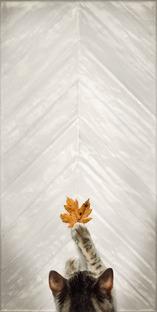 Legno, pietra, cotto e maiolica: varietà e fantasia con i pavimenti Whole