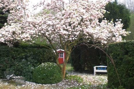 Giardino con Magnolia. Courtesy of Klaus-Dieter Bürklein