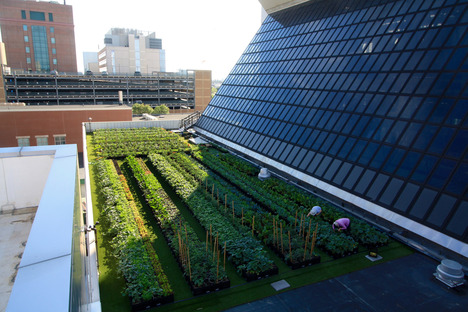 © Boston Medical Center Rooftop Farm Installation by Recover Green Roofs